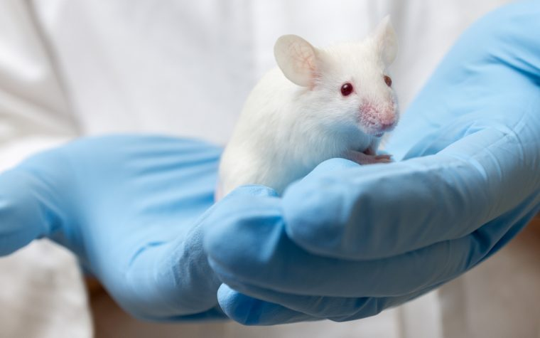 mice study of breast cancer