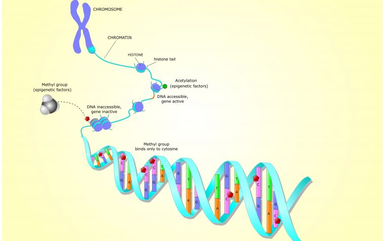 Epigenetic changes