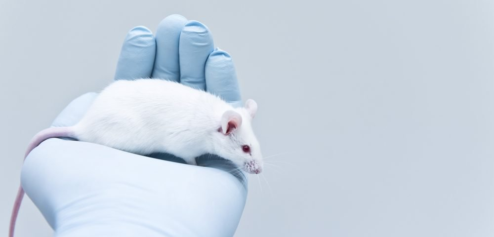 Immunotherapy, OSE-172, Seen to Be Safe and Effective in Mouse Models of Liver Cancer