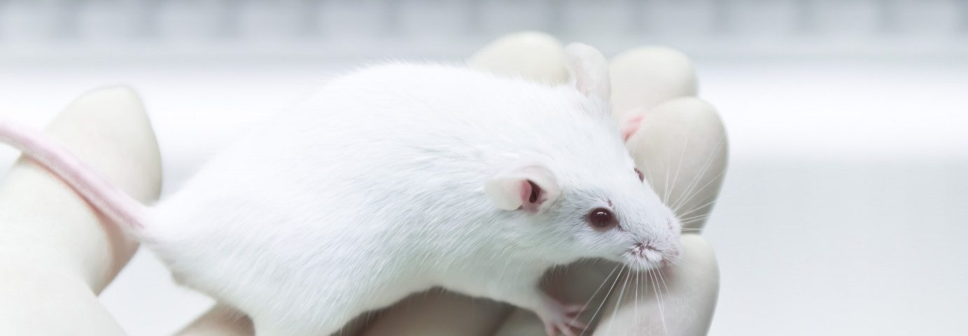 Prophylactic anti-TNF Therapy Improves Safety of Immunotherapies, Mouse Study Says